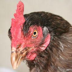 Make a chicken mask.