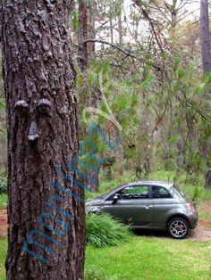 www.josemartinezverea.com  Cinquecento at  Tapalpa´s forest