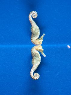 A Seahorse and his reflection at Monterey Bay Aquarium by Charlyce