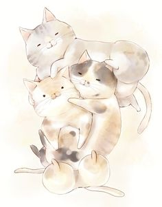 chubby kawaii cats