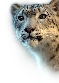 The mission of the Chicago Zoological Society is to inspire conservation leadership by connecting people with wildlife and nature.