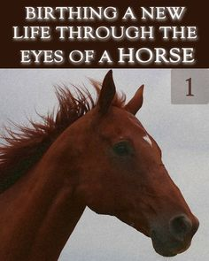 Astounding Insight into the difference between a Human incarnation and Animal Incarnation which gives an Existential view, critical to the Human Process of Self Realization. Life Review, Self Realization, Phobias, Animal Kingdom, Birth, Insight, Journey, Horses, Animals