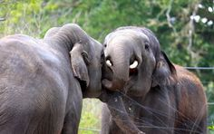 Observer les éléphants s'amuser