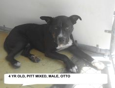 ★TO BE DESTROYED 9/18/15★OTTO located in Elizabethtown, NC Adopt him now!