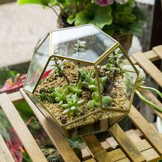Best AmazonSmile Gold Pentagon Sphere Glass Round Geometric Display Terrarium Box Copper Ball Shape Open Fern