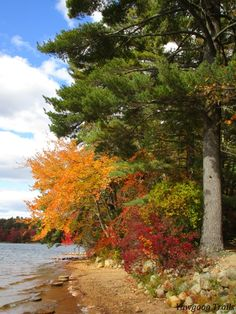 Fall foliage at the Ashaway Aquatics Center at Camp ‪#‎Yawgoog‬.  Image by David R. Brierley.