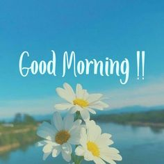 Everyone likes good morning images. If you too are searching for good morning images with flowers, then you have come to the right place. Welcome to our website. We provide good morning images on our website. Flirty Good Morning Quotes, Good Day Quotes, Good Morning Texts, Good Morning Messages, Good Morning Greetings, Good Morning Wishes, Morning Post, Happy Morning, Good Morning Images Flowers