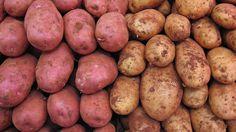 Kampf der Kartoffeln - Süßkartoffel gegen Kartoffel: Was ist gesünder? –…