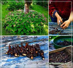 Размножение растений черенками и семенами (часть 2) | Сайт о саде, даче и комнатных растениях.