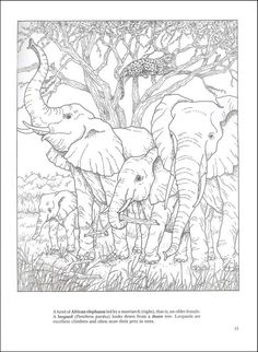 African Plains Coloring Book | Additional Photo (Inside Page)