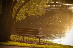 Bench, Park, Pond, Lake, Water