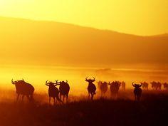 Serengeti (from National Geographic Travel)