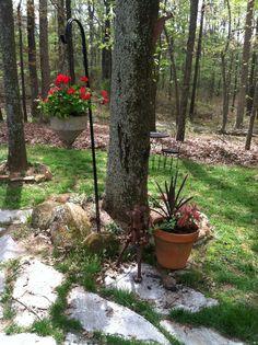 My backyard ....