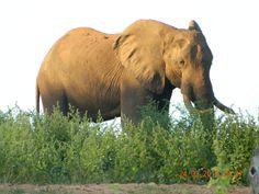 Elephant Lake Kariba , Zimbabwe Cute Baby Elephant, Zimbabwe, Cute Babies, Places, Animals, Beautiful, Animales, Animaux, Animal