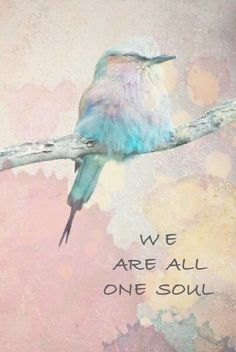 Beautiful Stories, Beautiful Birds, Hard Words, Unity In Diversity, We Are All One, Akashic Records, One Tree, Pretty Pastel