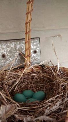 Robin egg blue