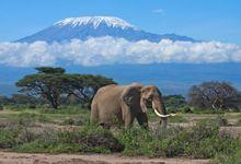 Elefante, Monte Kilimanjaro discovered by Viagens Ferias Monte Kilimanjaro, Kilimanjaro Climb, Image Elephant, Bull Elephant, Trekking, The Tourist, Paises Da Africa, East Africa, Kenya Africa