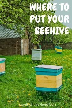 Finding the best place to put your backyard beehive. Good beehive placement aids in successful beekeeping. Honey Bee Hives, Honey Bees, Bee Hive Plans, Beekeeping For Beginners, Raising Bees, Bee Farm, Backyard Beekeeping, Bee Friendly, Hobby Farms