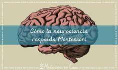 Cómo la neurociencia respalda Montessori – How neuroscience supports Montessori