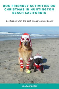 Dog Friendly Activities on Christmas in Huntington Beach California  Huntington Beach California is considered as one of California's dog-friendliest cities, Surf City USA welcomes four-legged children with open arms at dining, parks, as well as hotels, along its paved coastline path, and also dedicates a stretch of coastline to salty puppies. #Christmas #Christmas2020 #Chrsitmas2019 #ChristmasWishlist #Huntington #HuntingtonBeach #DogHuntington #ChristmasHuntington #California Places In California, California Travel, Pet Travel Carrier, Huntington Beach California, Travel Supplies, Open Arms, Dog Beach, Surf City, Marlow