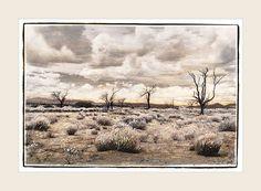 A Desert Walk - Marlene Neumann Fine Art Photography  www.marleneneumann.com  neumann@worldonline.co.za