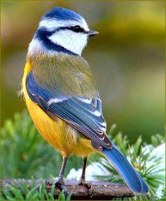 Grand Bempton Bird Table-peint Bleu