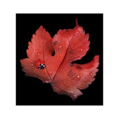 Red Sycamore Leaf Ladybird Brooch (1.420 RUB) ❤ liked on Polyvore featuring jewelry, brooches, leaf brooch, red jewelry, hand crafted jewelry, handcrafted jewelry and red brooch