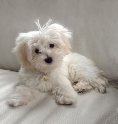 I Am Loved Dog Charm