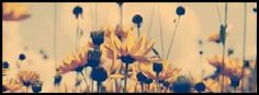 Flowers, nature, Facebook  cover photo