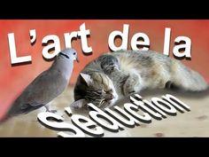 L'art de la séduction - YouTube
