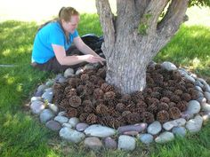 a great idea! Use pine cones instead of mulch! So I'll be picking up all your pine cones people!)What a great idea! Use pine cones instead of mulch! So I'll be picking up all your pine cones people! Landscaping Around Trees, Mulch Landscaping, Front Yard Landscaping, Landscaping Ideas, Mulch Ideas, Mulch Yard, Tree Mulch, Backyard Patio, Pine Cone Decorations