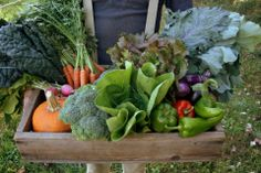 Now that's a CSA box.