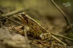 buddy frog on exploring the area Kokořín #goodtrip #frog #photo
