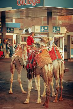 two fears in one: camels and gas stations