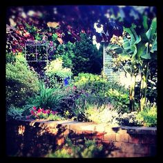 Evening sun in the Fishingham Garden | 06.24.12 | Photo by Jeff Fisher