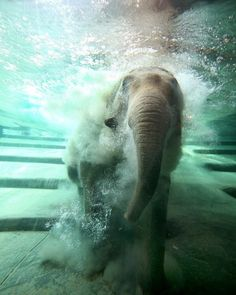 pictures of non aquatic animals under water look cool