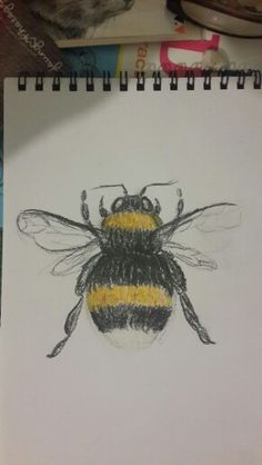 White tailed bumble bee sketch