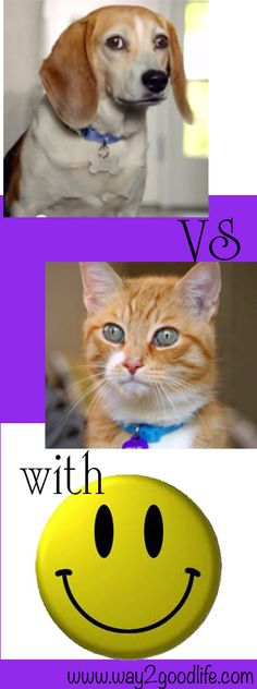 Who has your back: cat or dog?