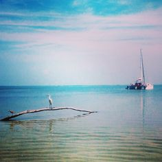 Beautiful way to spend the day Day Work, Fort Myers, Island Life, Ocean, Mountains, Beach, Travel, Beautiful, Instagram