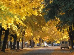Autumn leaves... line the streets