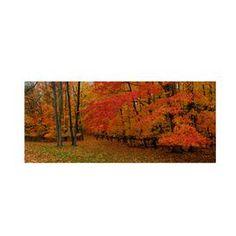 Ohio Autumn Canvas Art by Kurt Shaffer