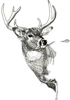 Buck by Nelson Haas Elk Drawing, Beach Drawing, Deer Art, Moose Art, Pencil Drawings, Art Drawings, Stippling Art, Deer Illustration, Deer Pictures