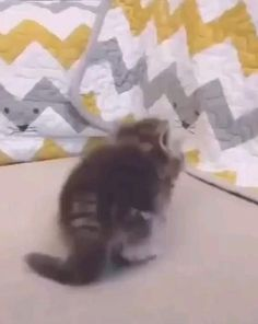 Cute Baby Cats, Cute Cats And Kittens, Cute Funny Animals, Cute Baby Animals, I Love Cats, Kittens Cutest, Animals And Pets, Funny Cats, Cute Babies