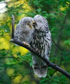 <3 Owl Love #wiseoldowl