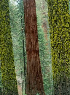 Colours and textures in Sequoia National Park - California