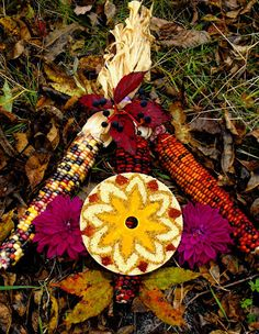Twig and Toadstool: Seed and Spice Mandala
