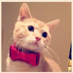 Animals in Bow Ties @animalsinbowties Instagram photos | Webstagram - the best Instagram viewer Did i miss the bus for my first day of school