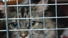 Man Busted With 500 Cats Meant For Restaurants