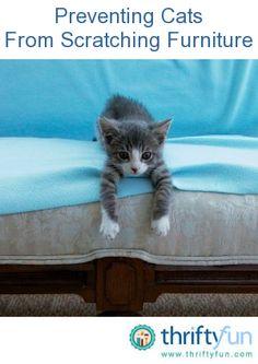29 Best Cat Proof Living Room Furniture Images Furniture