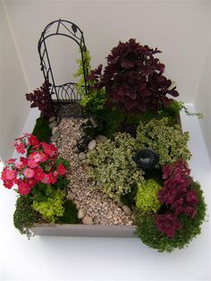 Click through for a do it yourself Fairy Garden Design. This one is called Classic Corner! It features a mini watering can, birdbath, red mars coleus, fine gold leaf stone crop, baby tears, and more!